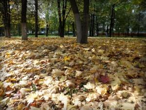 Осенняя листва около универмага Московский