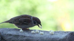 Хлеб для птиц