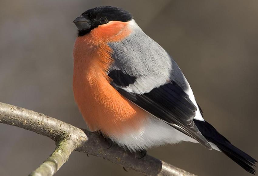 Картинки фото птиц - a9f7