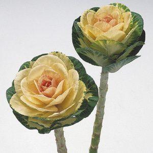 маленькие розы, пионы, гортензии, засушенные полевые растения